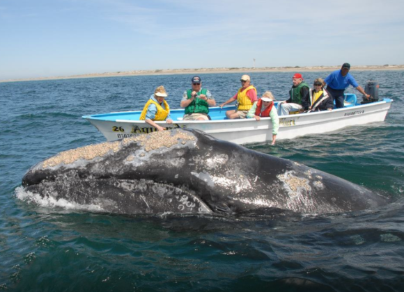 Whale Watching in Bodega Bay