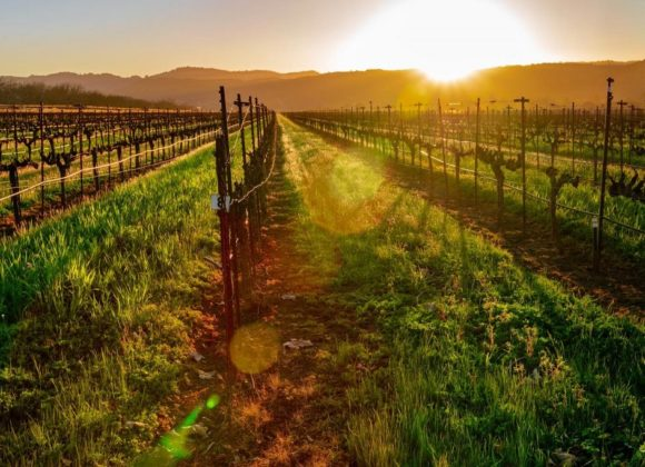 A Taste Of Napa Valley